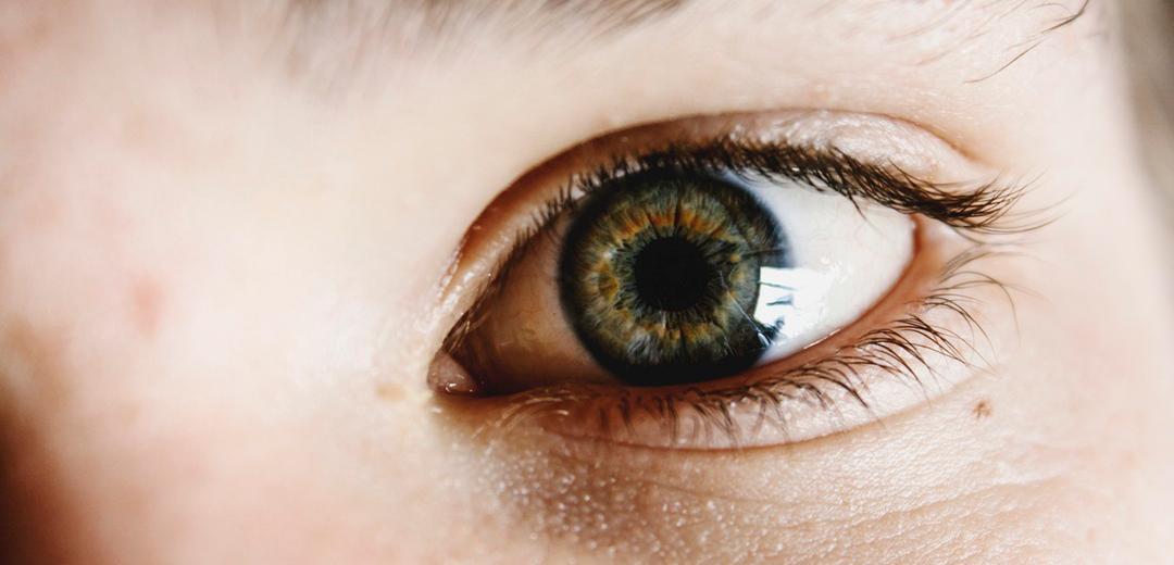 Claves para entender la visión II: el ojo - Área Salud Ocular