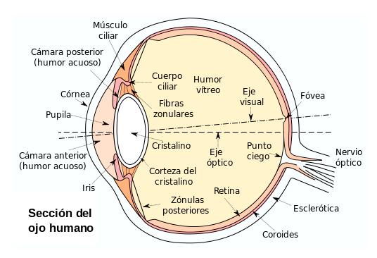 seccion_ojo_wiki